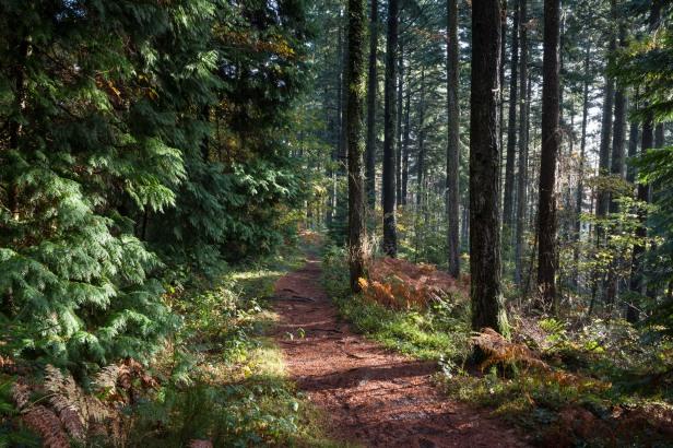 Abbeyford Woods, Devon